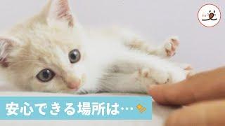 Download 車のエンジンルームに隠れていた子猫が優しい保護主さんと出会う話😻🐾【PECO TV】 Video