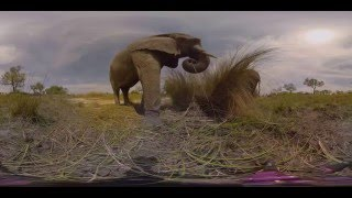 Download 360 Video, Living with Elephants - Photos of Africa Video