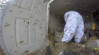 Download Massive Hornet Nest Removal Video