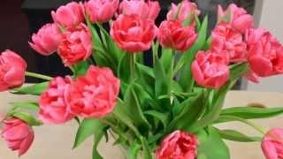 Download Gėlės gimtadieniui Video