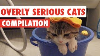 Download Overly Serious Cats Compilation 2016 Video