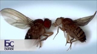 Download Большой скачок. Великие мухи науки. Фильм 1 Video