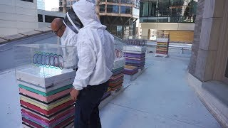 Download Designing Urban Beehives for the Sanctuary Seattle Video