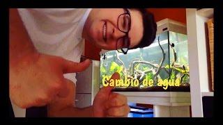 Download COMO HACER CAMBIOS DE AGUA EN ACUARIO |HD| Video
