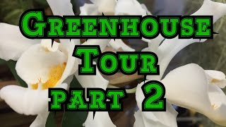 Download JANUARY GREENHOUSE TOUR PART 2: MORE ORCHIDS AND CARNIVOROUS PLANTS ! Video