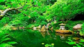 Download Deep Sleep Music and Nature Sounds - Zen Garden HD Relaxing Video