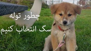 Download چطور توله سگ انتخاب کنیم Video