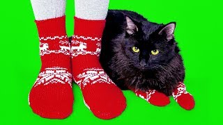 Download 12 COOLEST PET CRAFTS AND IDEAS Video