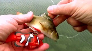Download Robot RC ROBO FISH Nemo clown fish & dead bait vs LIVE PIKE. Underwater attack Weird ways of fishing Video
