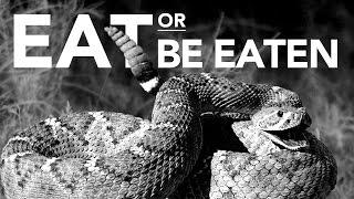 Download When predators attack prey, what determines success or failure? Video