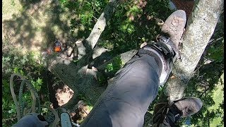 Download Gio On The Ropes Part 1 (Oak Removal) Video