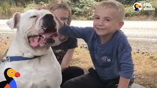 Download Boy Helps Hundreds of Dogs Find Homes With Heartwarming Videos | The Dodo Video