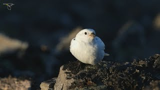 Download Young Birders Event: Expedition Arctic - Andy Johnson Video