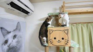 Download 猫部屋のクーラー稼働!そしてゴッドパンチ! Video