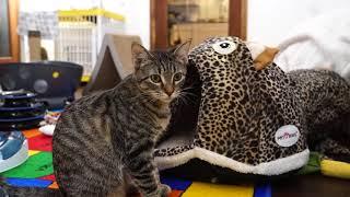 Download Kitten Close Up 2017-12-04 Video