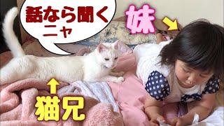 Download 3歳児の話し相手もする神猫さん 【猫さんとヒメちゃんはお友達】 Video