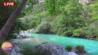 Download Gentle river-Relaxing water sound-Nightingale song-Soothing river sounds-Sleep Relax Study - Live Video