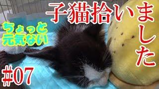 Download 【猫】子猫拾いました#07:便秘で少し元気がなくなりました。【非鉄】 Video