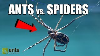 Download FIRE ANTS vs. GIANT SPIDERS! Video
