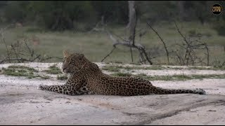 Download Pt 2 Safari Live's Sunset Safari Drive at 5:30 PM on April 24, 2018 ( Hosana ) Video