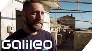 Download Gefängnis-Insel: Hier laufen die Schwerverbrecher frei herum | Galileo | ProSieben Video