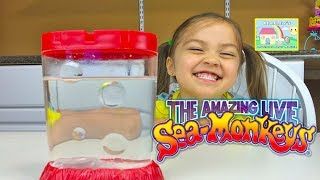 Download THE AMAZING LIVE SEA MONKEYS! Cute & Easy Pets for Kids - Fun Kids Activity Review Video