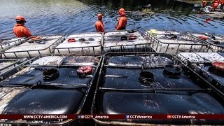 Download Mexico's oil thieves cost industry billions of dollars Video