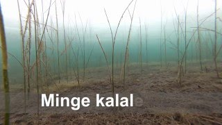 Download ″Mine kalale″ Kalapüük talvel Video