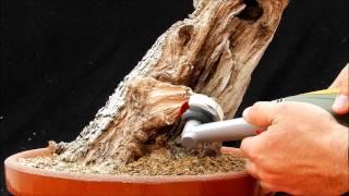 Download Bonsai. Trabajo de madera Video