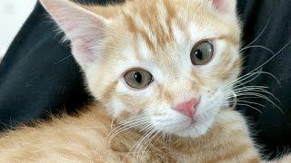 Download Kitten Close Up Video