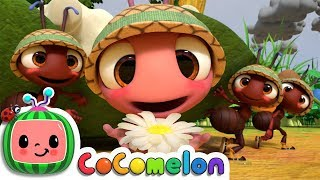 Download The Ants Go Marching   CoCoMelon Nursery Rhymes & Kids Songs Video