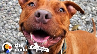 Download This is One of the Last Surviving Pitties from Michael Vick's Fighting Ring | The Dodo Pittie Nation Video