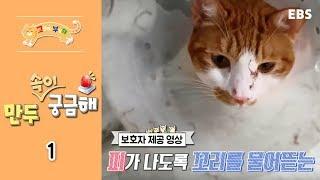 Download 고양이를 부탁해 - 일촉즉발! 만두 속이 궁금해 #001 Video