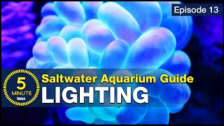 Download See how easy reef lighting a saltwater aquarium can be! Selecting the right reef LED solution Video