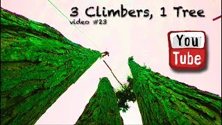 Download Three Climbers, 1 Tree Video
