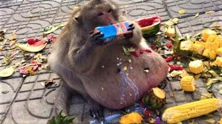 Download World's Fattest Monkey Spotted Video