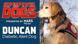 Download Diabetic Alert Dog: Duncan   Superpower Dogs Video