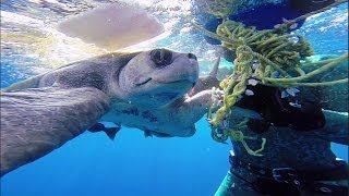 Download GoPro: Diver Saves Sea Turtle Video