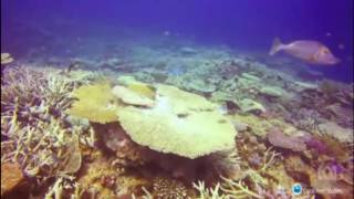 Download 67% of coral on the northern Great Barrier Reef is dead Video