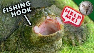 Download SNAPPER HOOKED...Turtle Rescue Mission! Video