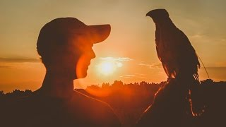 Download Raising, Training, and Hunting a Cooper's Hawk: A Synopsis Video
