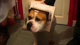 Download Cute Pets 😍😍 Cute Dogs Doing Funny Things (Part 2) [Funny Pets] Video