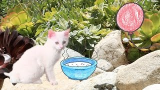 Download ULTIMATE KITTEN VIDEO - Episode 3 Video