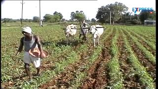 Download Tips for Maize cultivation by agriculturists V Narasimha Reddy - Paadi Pantalu Video