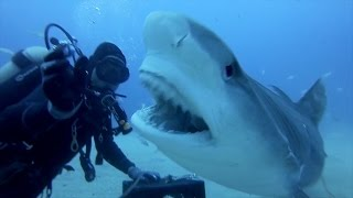 Download GoPro: Petting A Tiger Shark Video