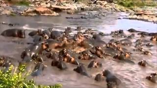Download Animals fight Best animals moments! Brutal Killers Wild Kingdom World Of Animals 2013 Video