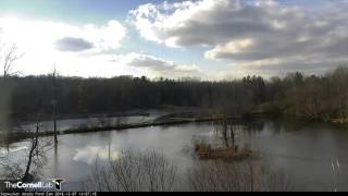 Download Pond Skyscape - Dec. 7, 2016 Video