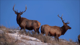 Download Wyoming's Wonderful Wildlife Video