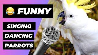 Download Loros Cantando 🔴 Loros Hablando Vídeo Recopilación (2018) Parrots Singing and Dancing Compilation Video