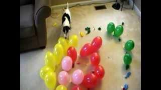Download DOG vs. BALLOONS V, SPIRAL OF DEATH Video